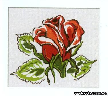 Схема с розой. роза