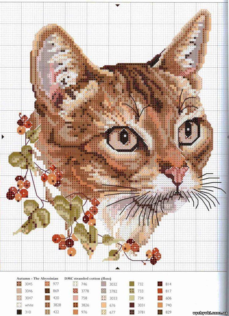 Вышивка кот