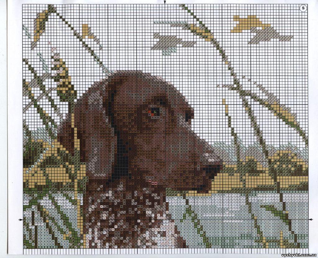 Бесплатная схема вышивка крестиком собак