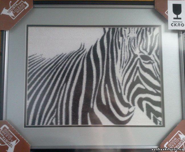 Вышивка зебры
