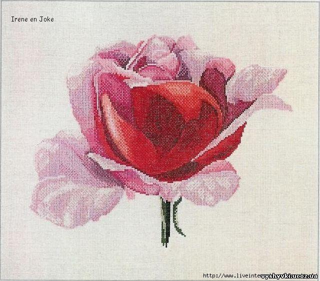 Роза - схема вышивки крестиком .